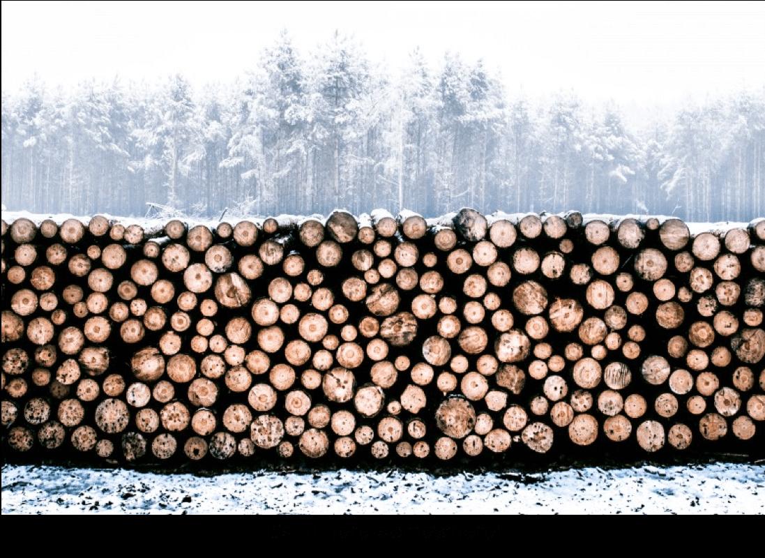 log_pricture_caption